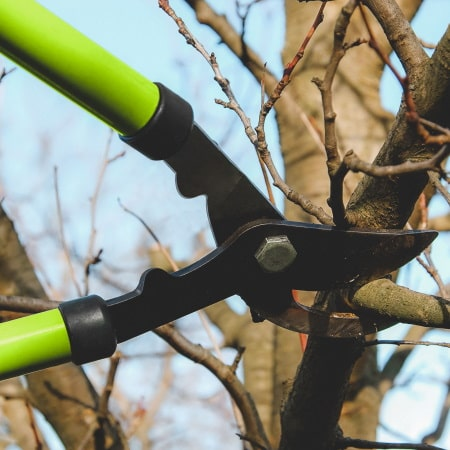 формирующая обрезка деревьев
