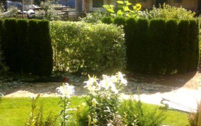 декоративная обрезка живой изгороди