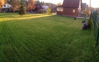 посевной газон на даче