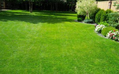 посевной газон на участке
