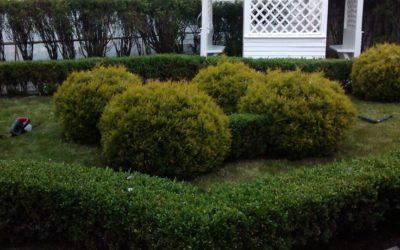 топиарная стрижка растений
